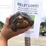 What to Do When Your Pet Turtle GoesMissing