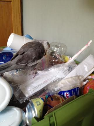 It's recycling day tomorrow. I'd better check everything out before I have Mom carry it out to the curb.