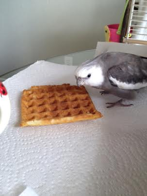 Oh boy! Oh boy! Oh boy! An untended waffle! I'll just crouch over it to stake my claim.