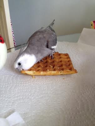 Oh, this corner is so delicious!