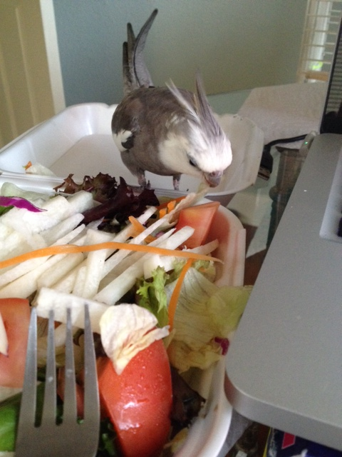 Boy, Mom brought home a great salad!