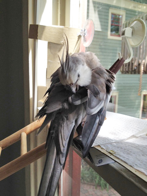 "Here's my ""backwards neck crane"" maneuver."