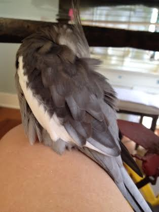 "Here, the feathery celebrity celebrates ""Labor Day"" by resting (it's just what you do to recover from all that resting.)"