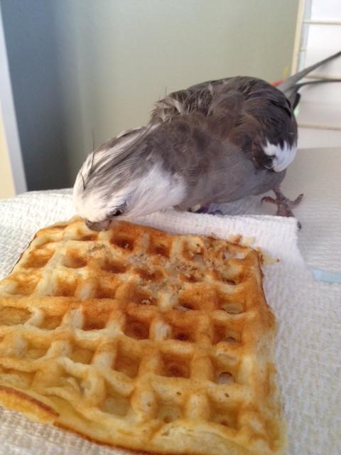 Look, Mom! A waffle!