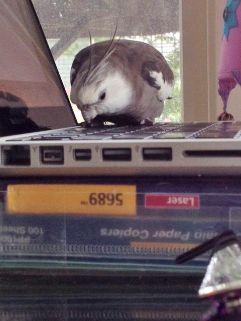 """Haha. I call """"keyboard!"""""""