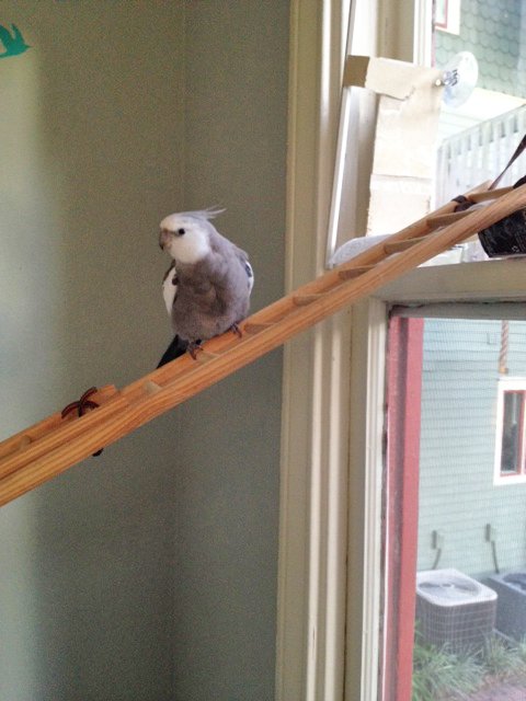 Now where did my large featherless props assistant go? It is very hard to do a great show with such inconsistent help.