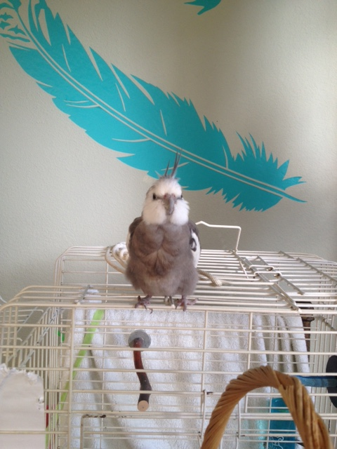 The highly trained (and very fierce) birdieguard begins his shift guarding Casa Feathers n Beak.