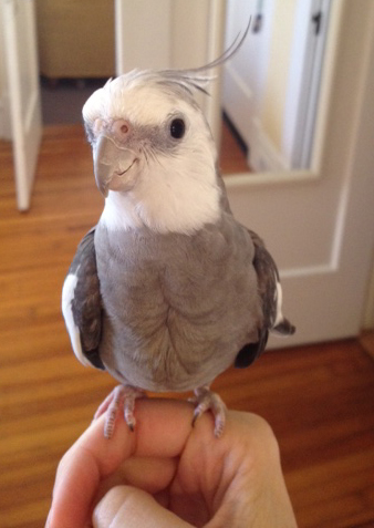 More pure sweetness - with a side of fluffy feathers.