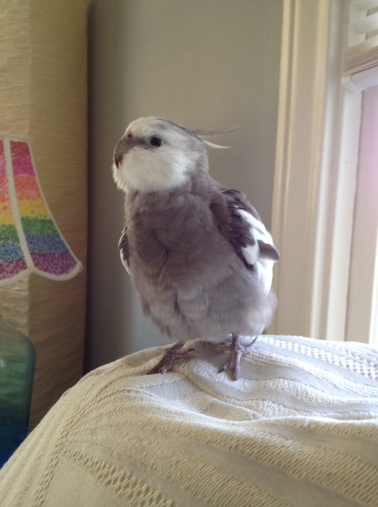 Even more pure sweetness - with extra-fluffy feathers on the side.