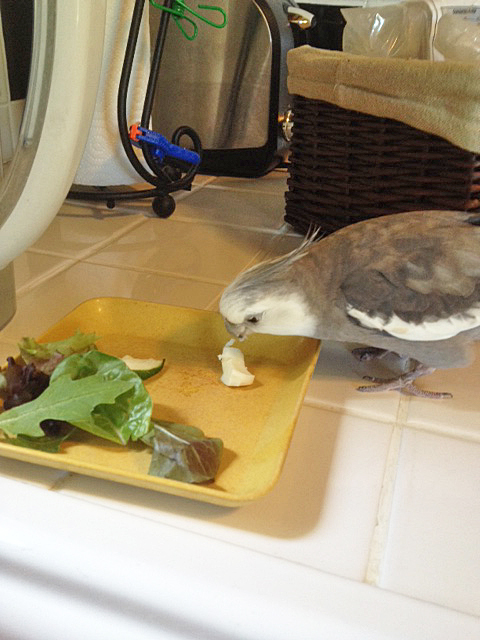 """This is the small shelled flock member's dish - I'll just take my """"alpha"""" share now and then my assistant can feed her."""