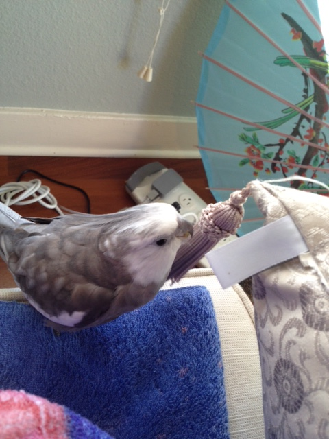 My name is Pearl. I am a famous and feathery parrot.