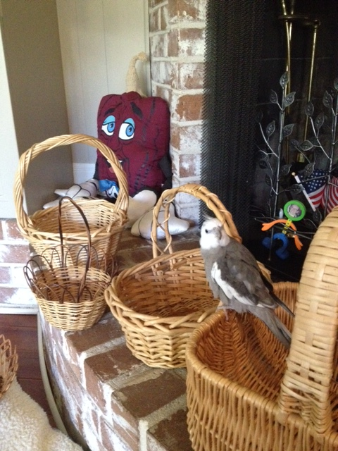 Sure, you can keep documenting the selection of my new basket for the fans.