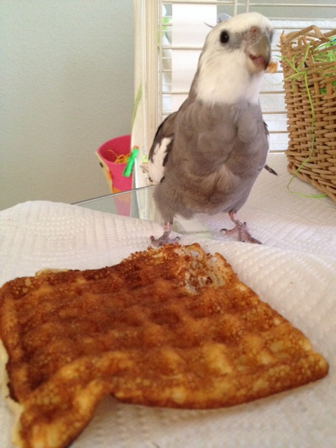 WHOA. Wait a minute. Maybe they don't know they could ask for waffles instead. MOM!!!!
