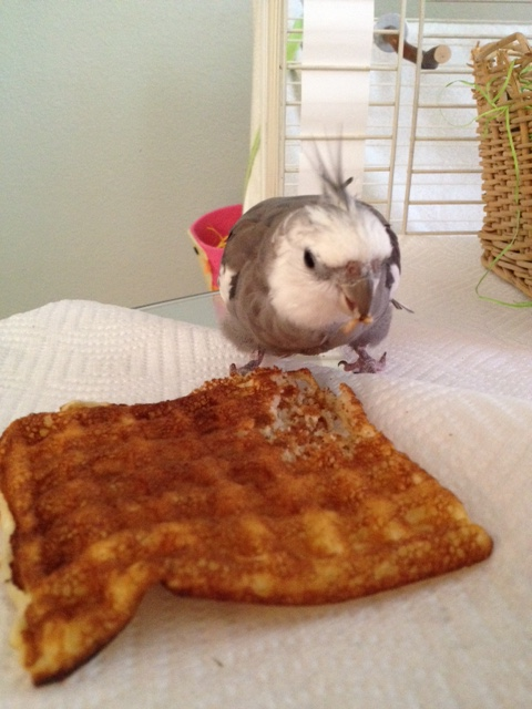 Although I will never figure out why the featherless ones sing for wassail when they could sing for waffles instead.