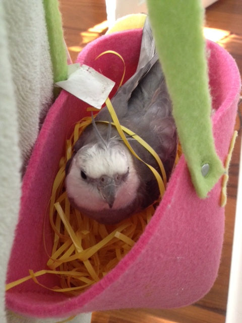 """NOTE TO HOST: While """"pondering"""" is in progress, be sure to look as suave and debonair - aka as much like """"James Bond"""" as possible - so she chooses your nest!"""