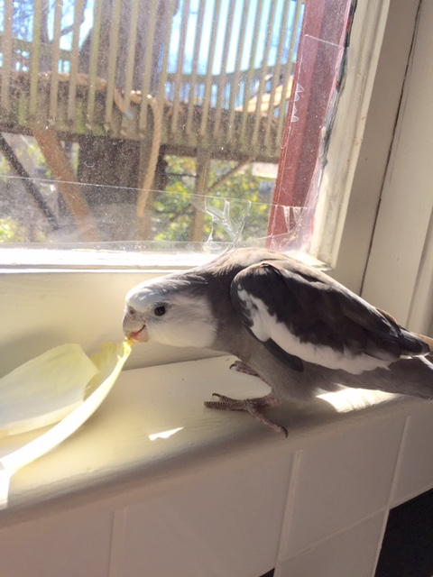 Okay, Endive, tell me a little bit about yourself. For instance, why do you want to apply to be my lunch?
