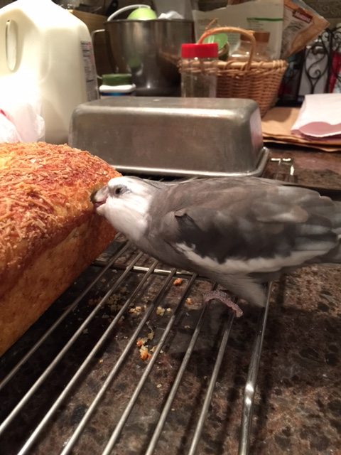 """Let me just perform another one of my patented """"consistency tests"""" to make sure it is still as tasty as I remember."""
