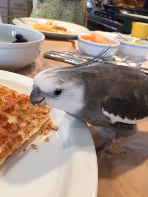 """This looks so scrumptious - I'm so glad I thought to order ahead from the """"Small Chef Bakery!"""""""