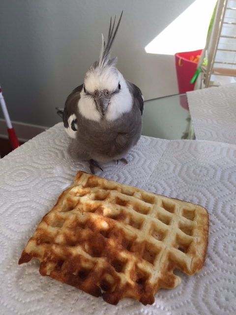 Do I have to model with this waffle? I'd rather eat it.