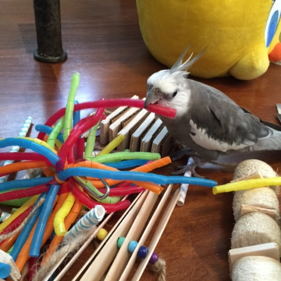 """What about you, red springy thing? A """"straw?"""" Well, welcome to Casa Feathers n Beak, Red Straw!"""