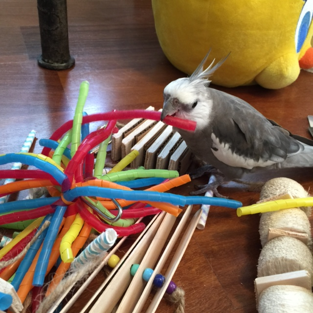 "What about you, red springy thing? A ""straw?"" Well, welcome to Casa Feathers n Beak, Red Straw!"