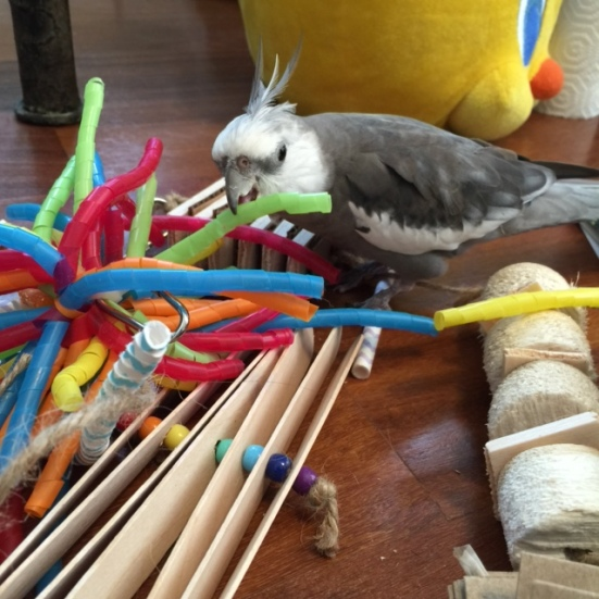 """""""Green straw?"""" Well, looks like your names will be easy to remember. Welcome to Casa Feathers n Beak!"""
