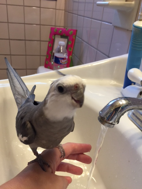 """Well, Mom, Faucet seems a bit unsure of his role as """"prop"""" - are you sure he's done this before?"""