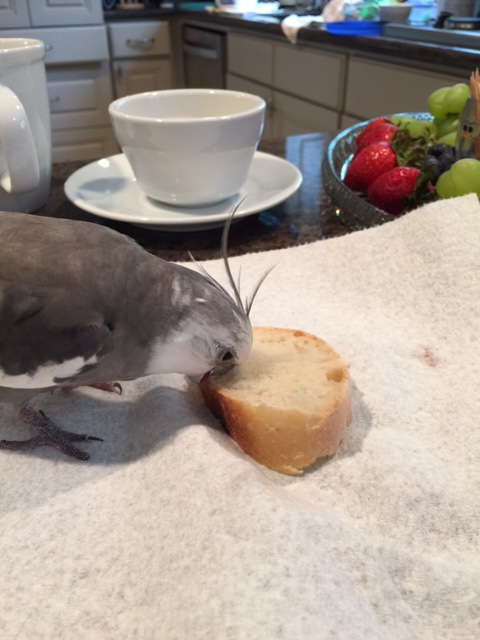 """This calls for my signature """"extreme measures"""" maneuver - the """"full face beak plant."""""""