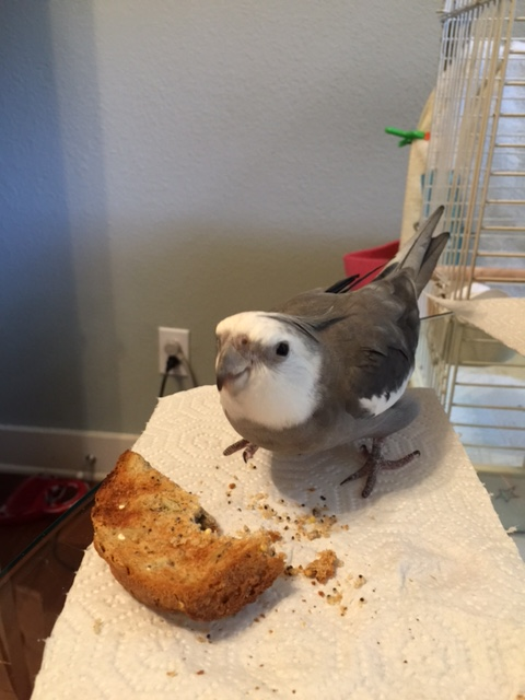 Why yes, Mom, the mission is going splendidly. Would I like roasted seed toast for lunch? However did you guess?