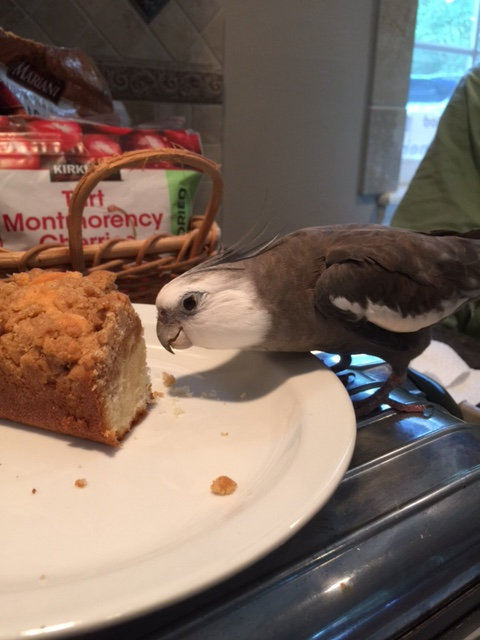 """So your name is """"crumb cake,"""" eh?"""