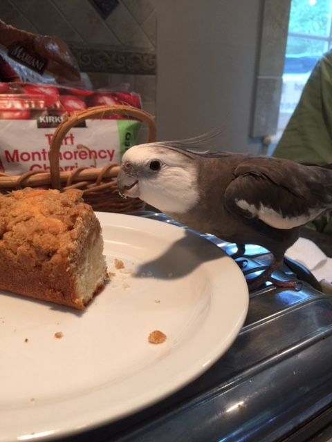 """She introduced me as """"the cutest and prettiness grandbird in the whole world,"""" but my actual given name is """"Pearl."""""""