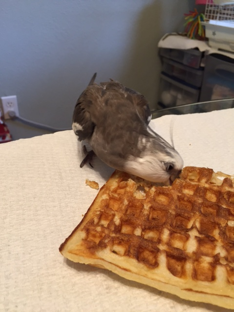 """I'm pretty sure the """"way of my people manual"""" says it's okay to thank and snack at the same time...."""