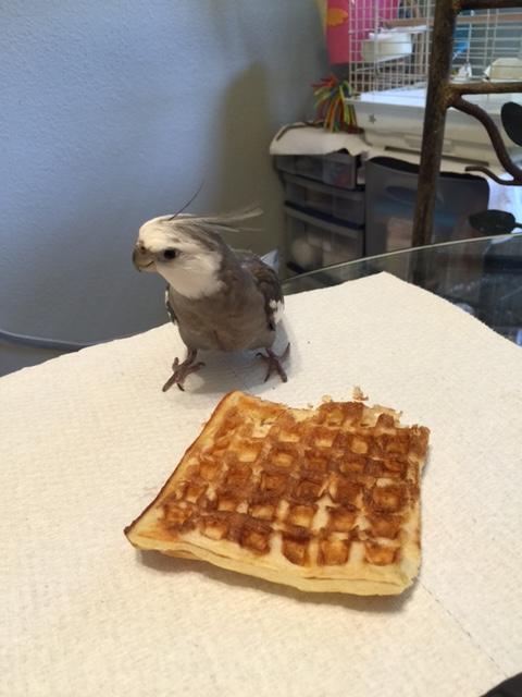 Oh boy. Unguarded fresh waffle prey!