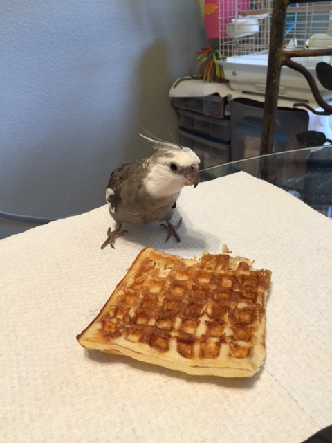 I can't believe this waffle is just sitting here, totally unclaimed.