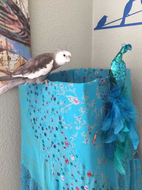 Oh! Hello there! Please permit me to introduce myself. My name is Pearl and I am very famous and feathery....