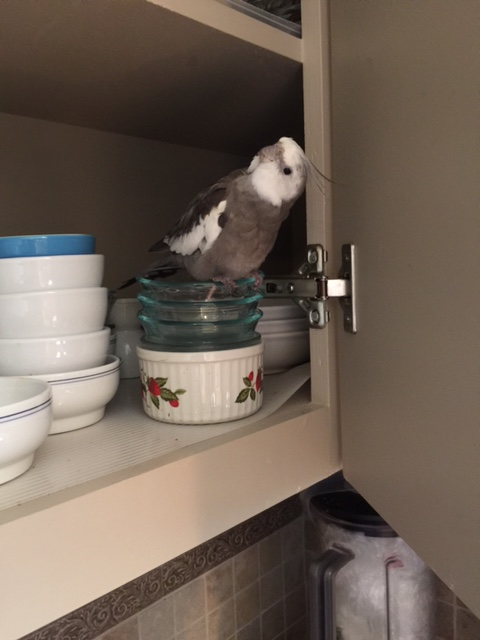 """What do you mean, """"Where's Fluffiness #4?"""" First let's talk about the super(bird)modeling contract waffle snack break terms...."""