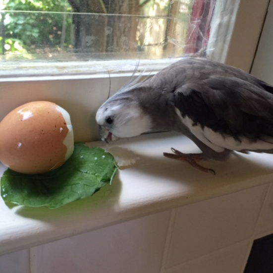 """Well that is very nice you cut off a chunk that is """"beak sized."""""""