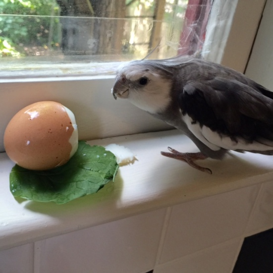 """Um, waitress? I clearly ordered mine """"hard boiled."""" What is this green thing?"""