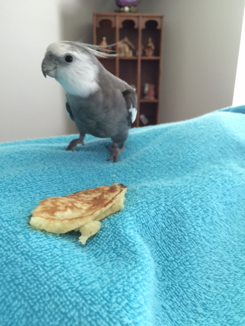 What's that, Mom? The Small Chef wants me to sample this pancake and give her my honest assessment?