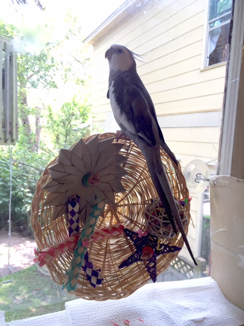 """Wicker watch hawks are not """"cute."""" We are ferocious. And fierce. We have powerful talons. I'd better dispatch a prey to show them - these fans must be """"visual learners."""""""