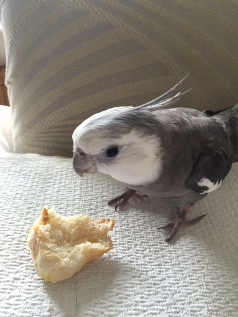 "Here I am with my fresh-baked (and very docile) ""starter prey."""