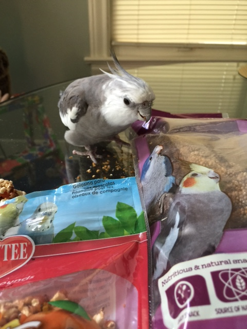 Welcome to the party! My name is Pearl. I am fetching and feathery and these are all my tasty snacks.