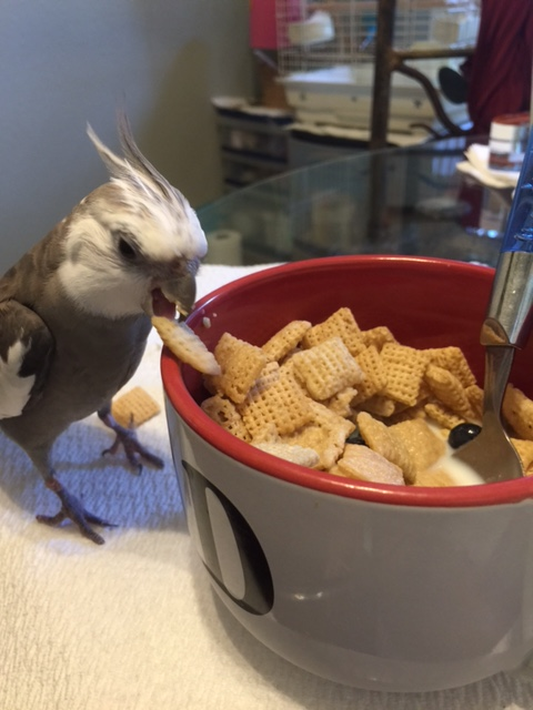 """Great! So I'll just select each of you in turn and when you feel the """"crunch"""" of my beak, that's how you know you just got my beak-o-graph."""