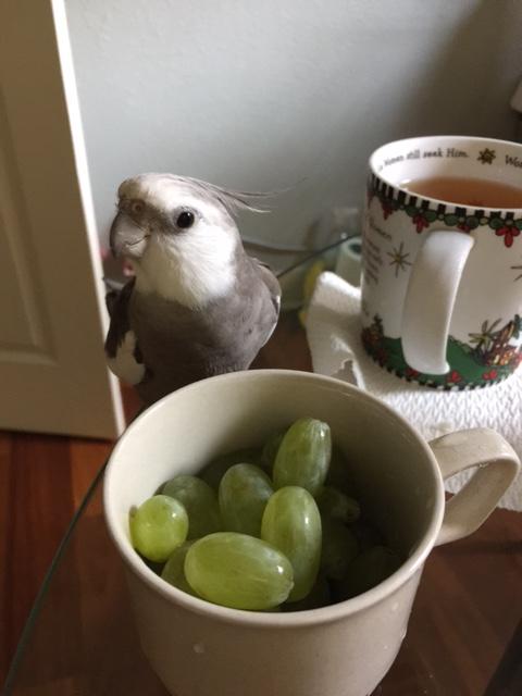Um, Mom? Green....eggs?