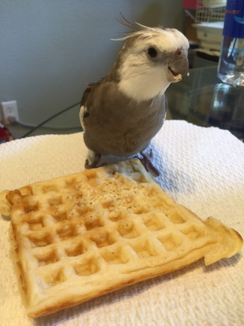 Sheesh! Don't tell me even the small shelled being has suddenly developed a taste for waffles....