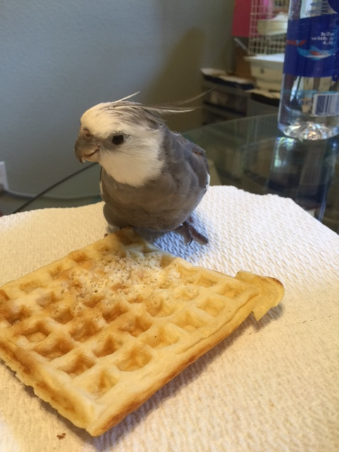 Yup - that's far enough, Mom. Yup - thanks again for the waffle.