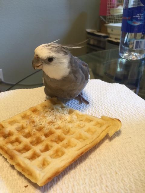 Yup - that's far enough, Mom. Yup - thanks again for the waffle.