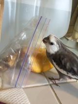 Day 339: Mango inTraining