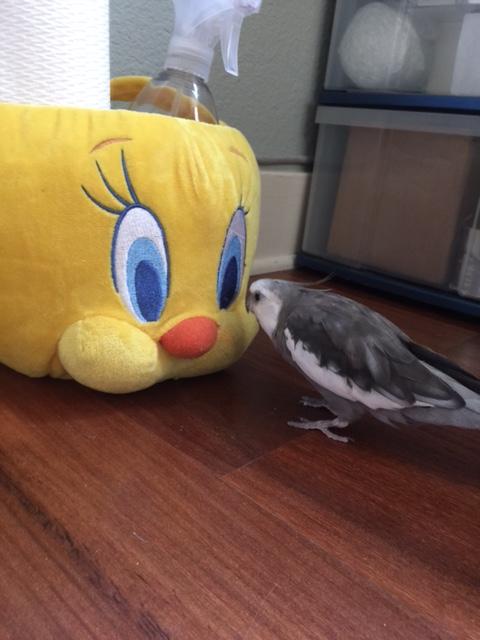 I see a ....beak....