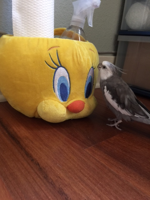 """You say your name is """"Tweety?"""""""